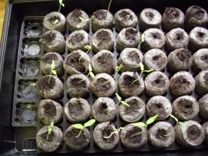Seeds B