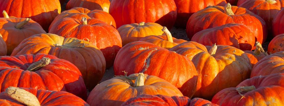 Pumpkins_banner-960x360